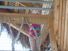 Girl peeking out from treehouse